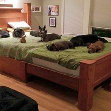 Casal constrói uma cama enorme para que todos os seus cães possam dormir com eles