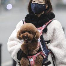 China ordena que as pessoas se livrem dos animais de estimação por causa do Coronavírus