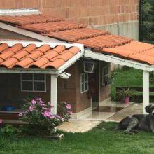 """Depois de adotados cães vivem em uma """"mansão"""" com varanda, jardim e câmera"""