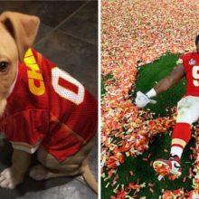 Ele ganhou o Super Bowl e cobriu os custos de adoção de cães abandonados de um abrigo