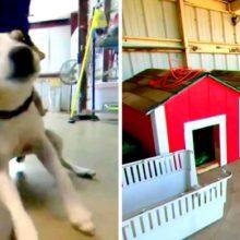 Estudantes constroem casinhas de cachorro na aula e doam para abrigos