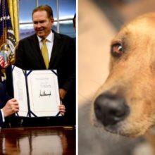 EUA aprova lei contra a crueldade animal. Já é um crime federal e pode resultar em anos de prisão
