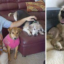 Homem abre asilo para cachorros abandonados idosos e transforma a vida deles