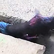 Morador de rua arrisca sua vida para salvar cachorro preso em um esgoto