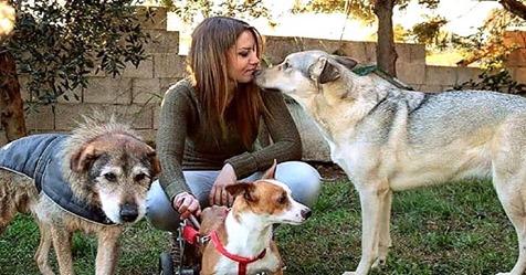 Mulher vai em canis e adota somente os cachorros idosos, dando a eles amor e afeto nos últimos dias de vida