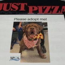 Pizzaria coloca fotos de cachorros em caixas de pizza para ajudá-los a serem adotados