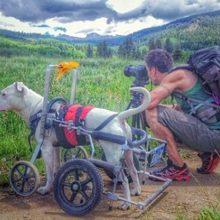 Cachorro de abrigo que não anda, agora viaja pelo país inteiro com seu novo pai