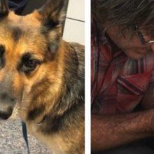 Cachorro salva a vida do dono após barco afundar e vira herói
