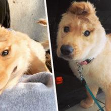 """Cachorro """"Unicórnio"""" tem uma única orelha no meio da cabeça é a coisa mais fofa que você vai ver hoje"""
