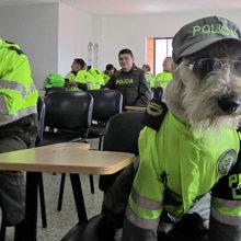 Cachorro vira-lata vira o cão mais bonito da polícia e faz muito sucesso