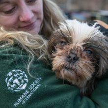 Cachorros e gatos abandonados pelo coronavírus começam a morrer de fome