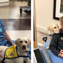 Cão conforta médicos e enfermeiros de emergência, lutando contra a pandemia