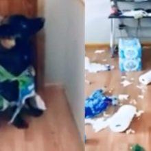 Cão rasgou papel higiênico que mulher havia comprado para quarentena