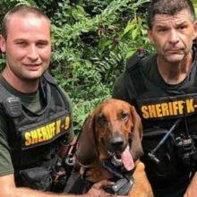 Cão salva menino autista de 3 anos desaparecido em uma mata e foto emociona