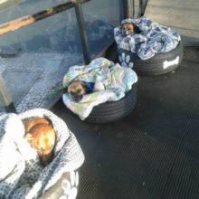 Estação de ônibus abriga cães de rua e oferece camas para protege-los do frio