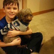 Garotinho escolheu cão idoso para adotar, para que ele possa ter um final de vida feliz
