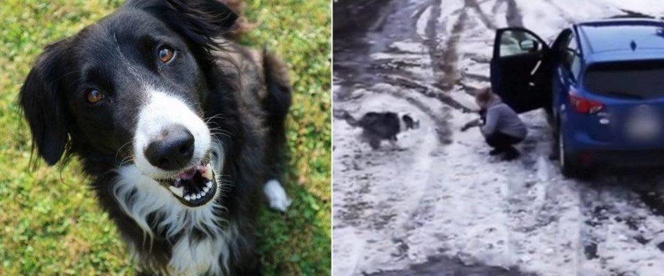 Impressionante cachorro herói salva filhote de atropelamento