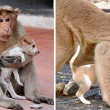 Macaco protege um filhote de cachorro de um feroz cão e o adota