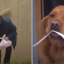 Um cão está entregando mantimentos para seu vizinho idoso com problemas respiratórios