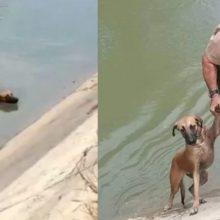 Um policial salvou um cachorro que estava preso em um canal