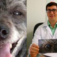 Veterinário faz cirurgia e consegue devolver a visão do cãozinho cego