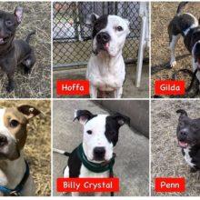 Abrigo de animais fica sem cães para adoção pela primeira vez na história