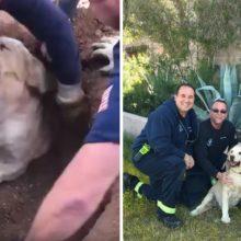 Bombeiros resgataram cachorro preso em buraco, resgate durou 20 minutos