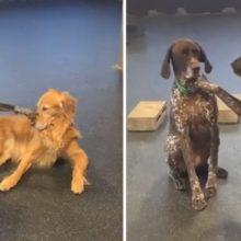 Cachorro acaricia todos seus amigos desde pequeno e chama atenção de todos