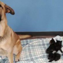 Cachorro de rua foi resgatado e ele cuidava de cinco gatinhos recém-nascidos