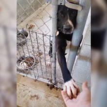 Cachorro de um abrigo dá pata quando alguém passa por ele