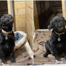 Cachorro em abrigo sorri para tentar ser adotado e faz muito sucesso