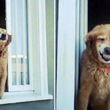 Cachorro idoso dá um sorriso enorme para seus vizinhos toda manhã