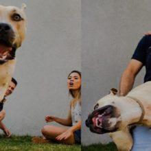 Cachorro invade fotos de um ensaio de casamento e diverte a internet
