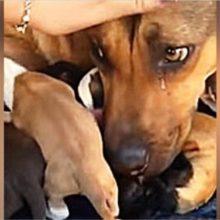 Cachorro não podia conter as lágrimas de emoção por estar segura com seus filhotes