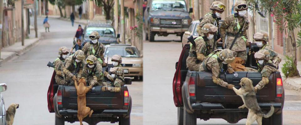 Cachorros de rua perseguem carro de militares em quarentena e são adotados