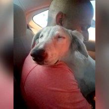 Cão abandonado relaxa ao perceber que foi adotado e que estava indo para a sua nova casa