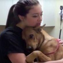 Cão é resgatado e salvo 5 minutos antes do horário em que seria sacrificado