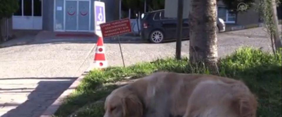 Cão espera na frente do hospital por seu dono que está em terapia intensiva