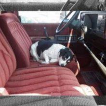 Cão mata saudades do seu dono que faleceu indo todos os dias no seu caminhão