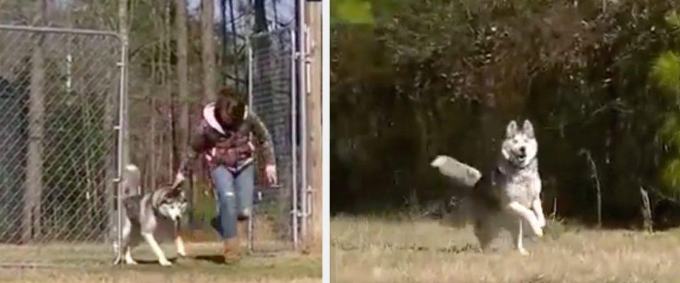 Cão passa parte da sua vida acorrentado, mas finalmente é solto e corre em campo aberto