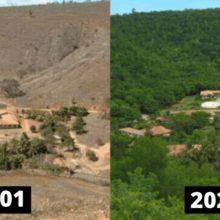 Casal plantou 2 milhões de árvores em 20 anos para restaurar uma floresta