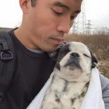 China tira cachorros da lista de animais para consumo humano
