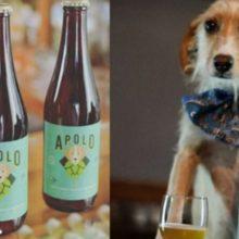 """Conheça a cerveja Mexicana """"Apolo"""" que ajuda cachorros de rua"""