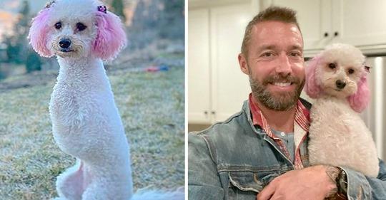 Cora, o cão deficiente com orelhas cor de rosa que derrete a internet
