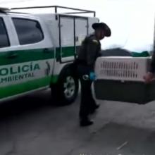Envenenam mais de 50 cachorros e gatos em um bairro, policia investiga