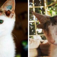 Gatinho com 4 orelhas e um olho é finalmente adotado e conhece a felicidade