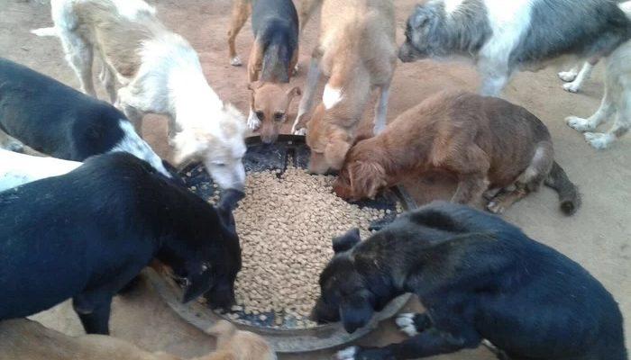Grandes marcas do setor Pet doam 40 toneladas de ração para cães e gatos