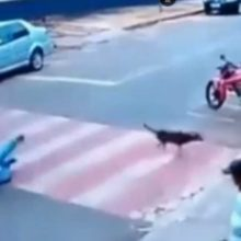 Homem é filmado sendo derrubado por cachorros na faixa de pedestres