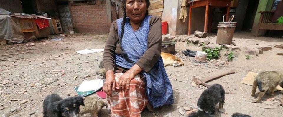 Idosa passou a vida toda alimentando cães de rua e agora não tem nem para ela e nem para seu animais