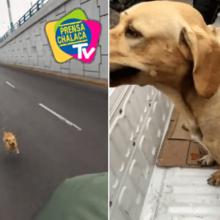 Marinheiro resgatou cachorro abandonado enquanto patrulhava as ruas